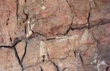якутия палеонтология