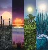 растения на планетах
